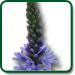 Blue Vervian plant